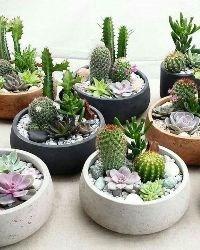 Кашпо для кактусов и суккулентов
