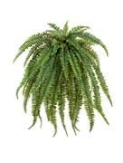 Растения для фитостен