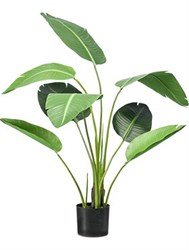 Горшечные растения