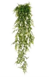 Растения на фитостены