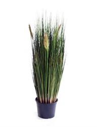 Трава, осока
