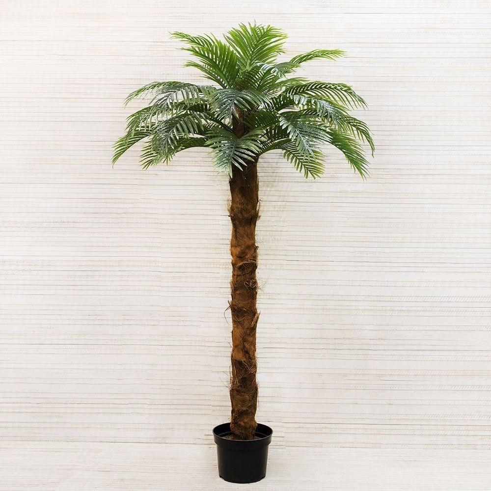 Купить Пальму В Интернет Магазине Недорого