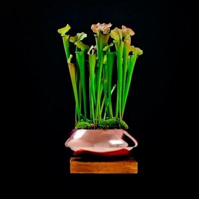 Чаша Pottery Pots Тара Мини платина - фото 11327