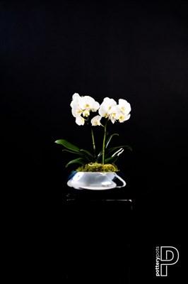 Чаша Pottery Pots Тара Мини платина - фото 11331