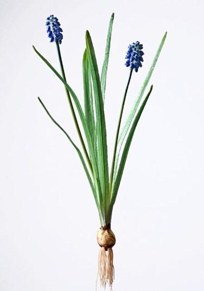 Мускари голубой с луковичкой (искусственный) Treez Collection - фото 12697