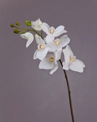 Орхидея Фаленопсис Adelaide белая (искусственная) Treez Collection - фото 13068
