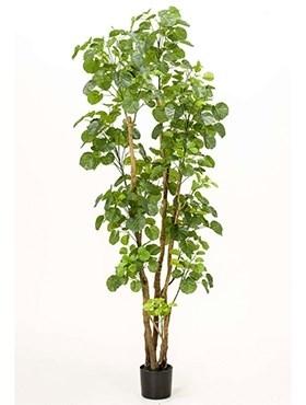 Дерево Полисциас  (591 листьев) искусственное Nieuwkoop Europe - фото 14269