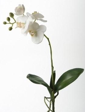 Орхидея Фаленопсис с листьями (искусственная) Nieuwkoop Europe - фото 14393