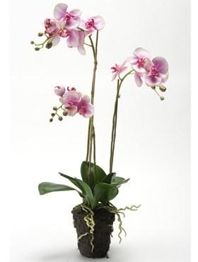 Орхидея Фаленопсис с землёй (искусственная) Nieuwkoop Europe - фото 14394