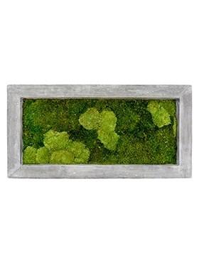 Картина из мха raw grey 30% ball- and 70% flat moss (искусственная) Nieuwkoop Europe - фото 14640