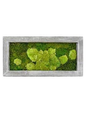 Картина из мха raw grey 50% ball- and 50% flat moss (искусственная) Nieuwkoop Europe - фото 14643