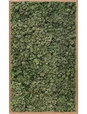 Картина из мха bamboo 100% reindeer moss (dark green) искусственная Nieuwkoop Europe - фото 14663