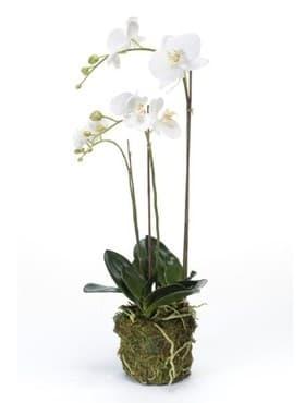 Орхидея Фаленопсис с землёй и мхом (искусственная) Nieuwkoop Europe - фото 29467