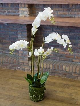 Орхидея Фаленопсис с землёй и мхом (искусственная) Nieuwkoop Europe - фото 29469