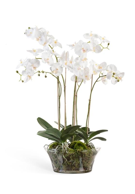 Орхидея Фаленопсис белая в низкой круглой вазе с мхом, корнями, землёй (искусственная) Treez Collection - фото 8138