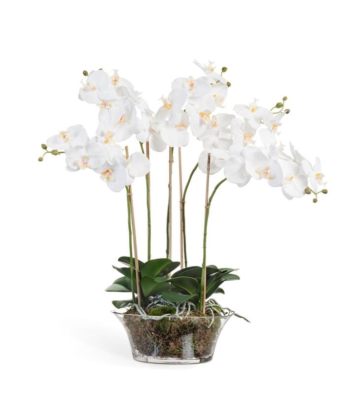 Орхидея Фаленопсис белая в низкой круглой вазе с мхом, корнями, землёй (искусственная) Treez Collection - фото 8139