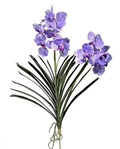 Орхидея Ванда куст св.сирен с прожилк с корнями (искусственная)