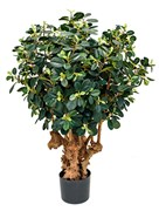 Фикус Панда (1500 листьев)