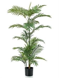 Пальма Феникс (26 листьев)