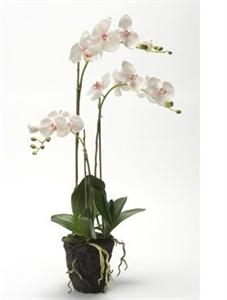 Орхидея Фаленопсис с землёй (искусственная) Nieuwkoop Europe