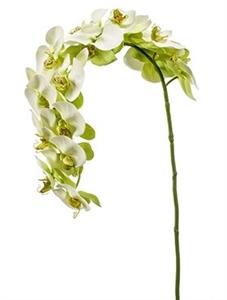 Орхидея Фаленопсис изогнутая
