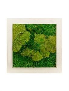 Картина из мха natural 50% ball- and 50% flat moss