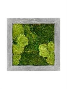 Картина из мха raw grey 30% ball- and 70% flat moss