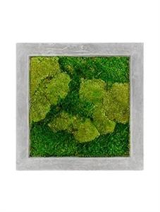 Картина из мха raw grey 50% ball- and 50% flat moss
