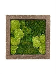 Картина из мха rock 30% ball- and 70% flat moss