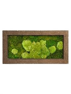 Картина из мха rock 50% ball- and 50% flat moss