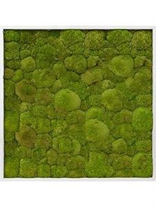 Картина из мха aluminum 100% ball moss (natural)