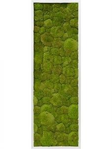 Картина из мха aluminum 100% flat moss (natural)