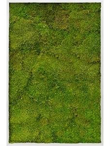 Картина из мха aluminum 100% flat moss