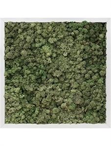Картина из мха aluminum 100% reindeer moss (dark green)