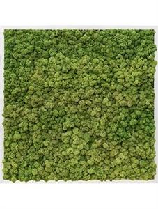 Картина из мха aluminum 100% reindeer moss (forest green)