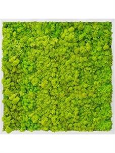 Картина из мха aluminum 100% reindeer moss (spring green)