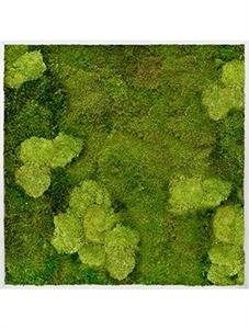Картина из мха aluminum 30% ball moss (natural) and 70% flat moss