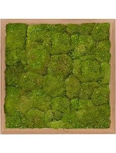Картина из мха bamboo 100% flat moss (natural)