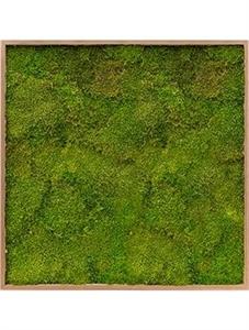 Картина из мха bamboo 100% flat moss