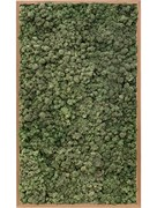 Картина из мха bamboo 100% reindeer moss (dark green)