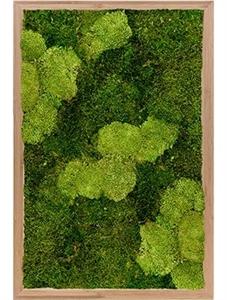 Картина из мха bamboo 30% ball moss (natural) and 70% flat moss
