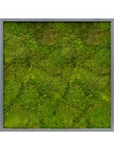 Картина из мха mdf ral 7016 satin gloss 100% flat moss