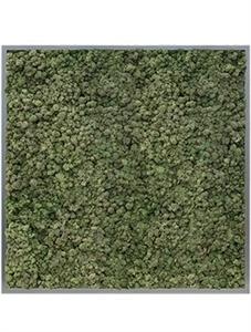 Картина из мха mdf ral 7016 satin gloss 100% reindeer moss (dark green)