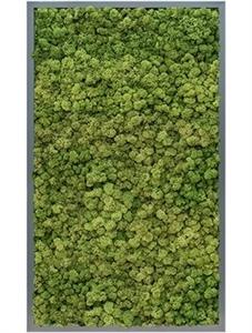 Картина из мха mdf ral 7016 satin gloss 100% reindeer moss (forest green)