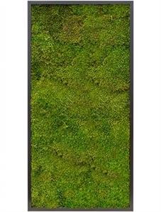 Картина из мха mdf ral 9005 satin gloss 100% flat moss