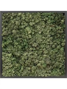 Картина из мха mdf ral 9005 satin gloss 100% reindeer moss (dark green)