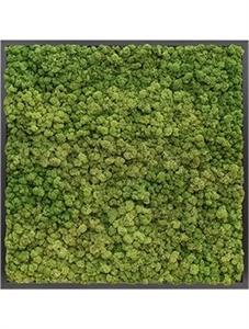 Картина из мха mdf ral 9005 satin gloss 100% reindeer moss (forest green)