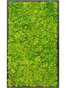 Картина из мха mdf ral 9005 satin gloss 100% reindeer moss (spring green)