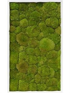 Картина из мха mdf ral 9010 satin gloss 100% ball moss (natural)