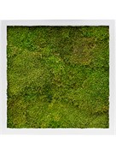 Картина из мха mdf ral 9010 satin gloss 100% flat moss